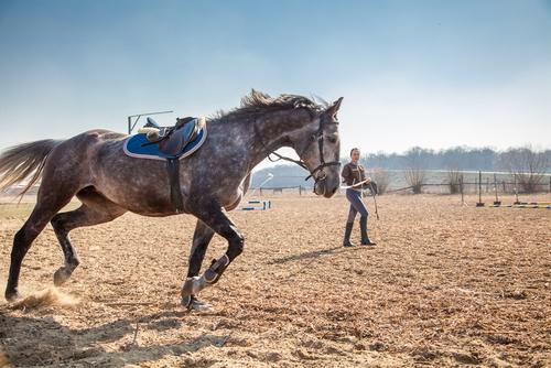 exercices pour tenir son cheval en forme